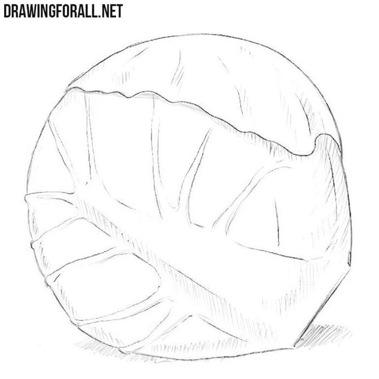 How to Draw a Brussels Sprout