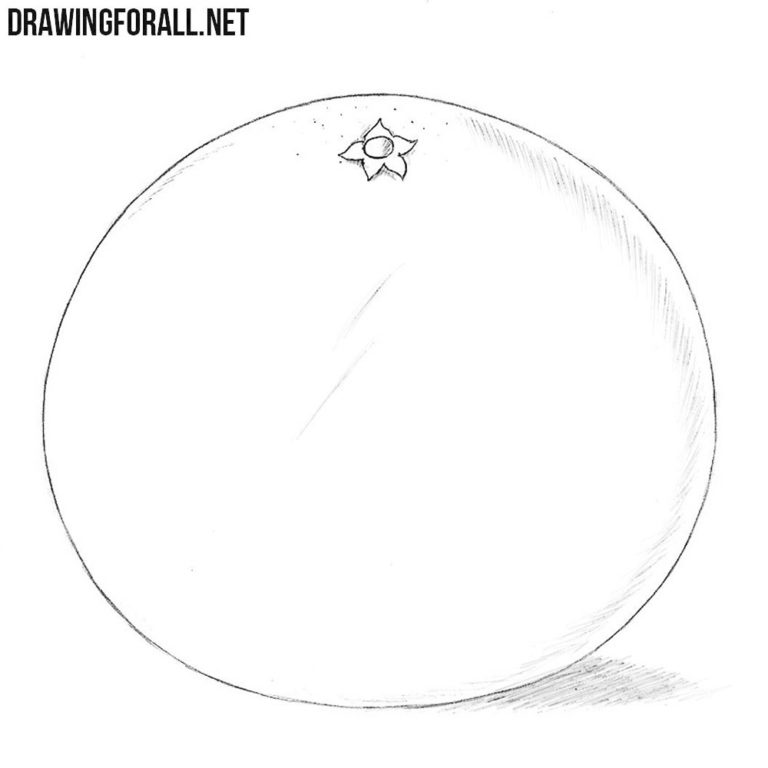 How to Draw a Grapefruit