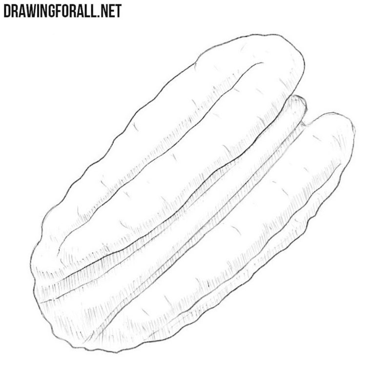 How to Draw a Pecan