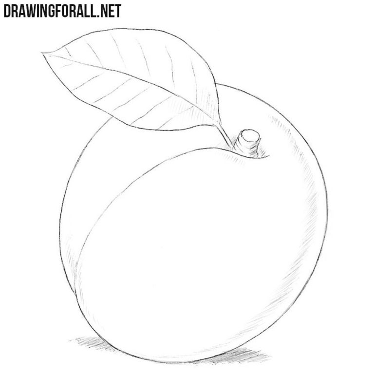 How to Draw an Apricot