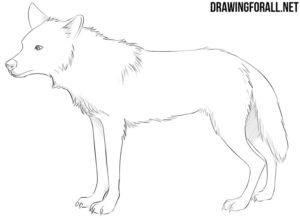 Anime animal drawing