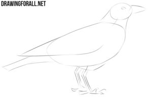 How to draw a crow for beginners