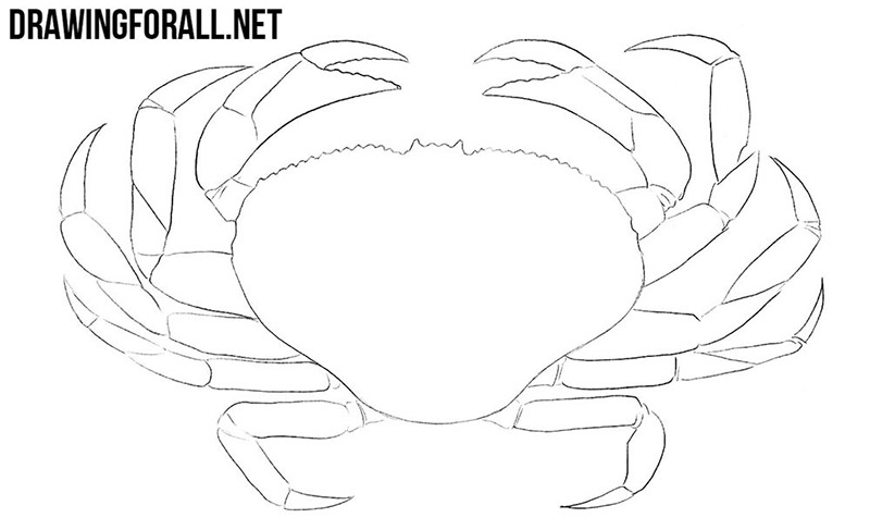 Crab drawing lesson