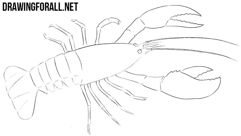 How to draw an astacus astacus