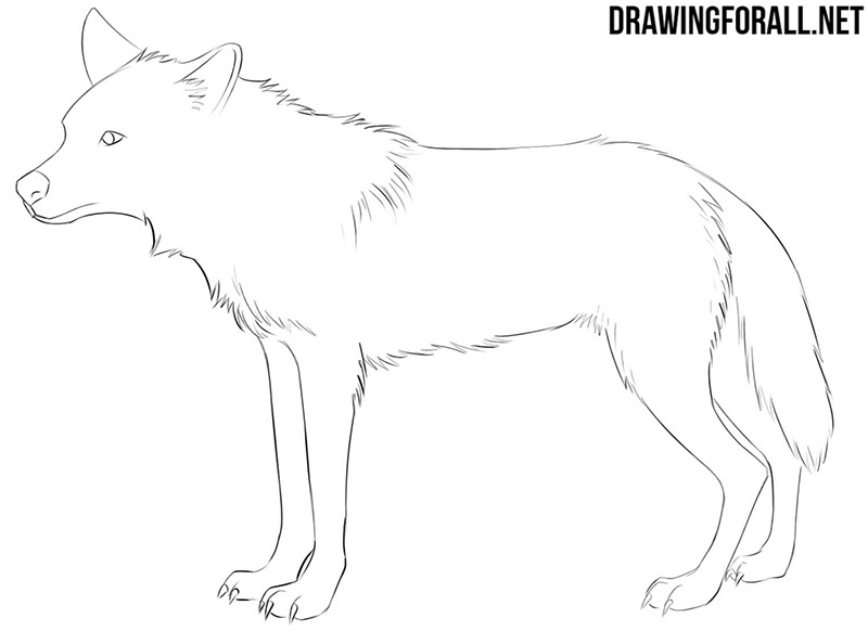 Anime animal drawing tutorial