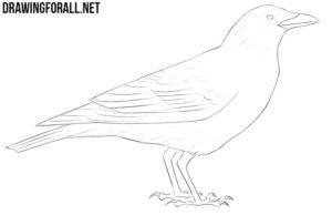 Crow drawing tutorial