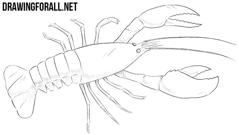 How to draw a crayfish