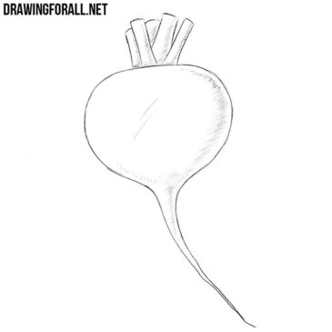 How to Draw a Radish
