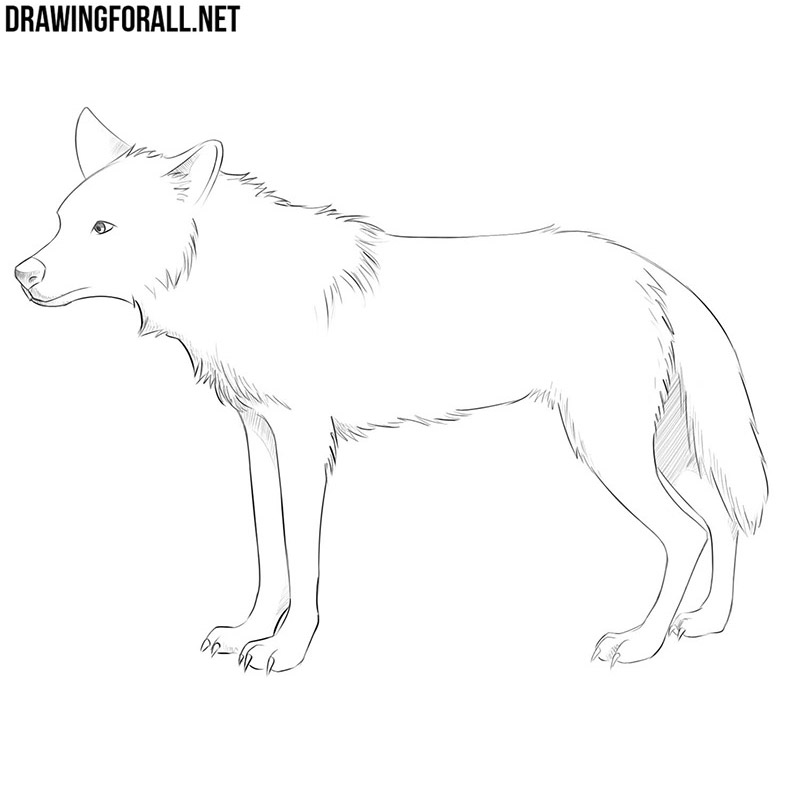 How To Draw An Anime Animal Drawingforall Net