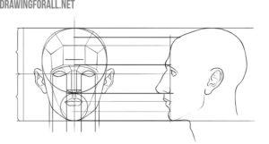 human head proportions