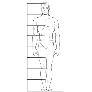 Human Body Proportions