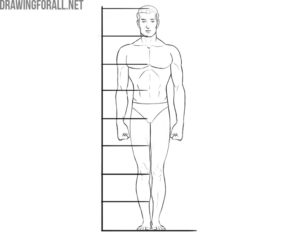 human proportions