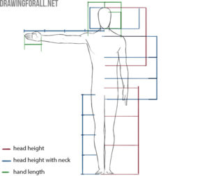 human proportions in drawing