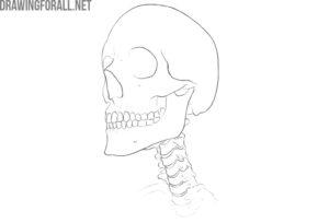 neck bones anatomy