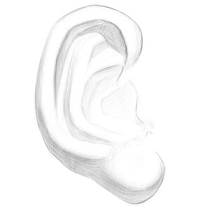 Anatomy of ears for artists