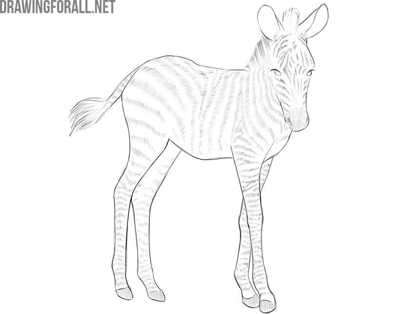 baby zebra drawing tutorial
