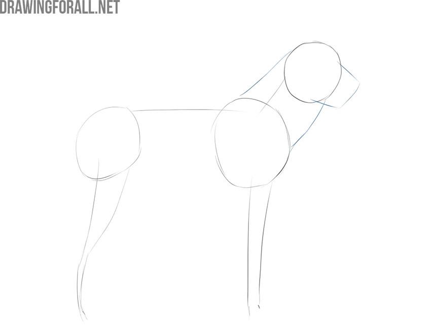 dog drawing tutorial
