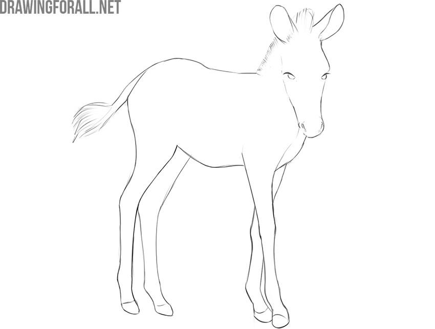 how to draw a baby zebra step by step