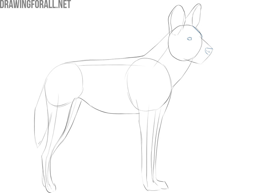 how to draw a cute african wild dog