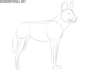 how to draw a realistic african wild dog