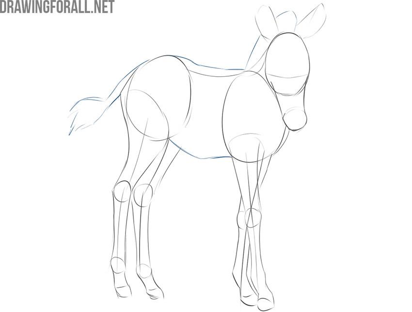 how to draw a realistic baby zebra