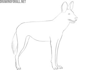 how to draw an african wild dog easy