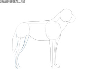 how to draw an african wild dog easy step by step
