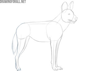 how to draw an african wild dog face