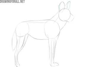 how to draw an african wild dog head