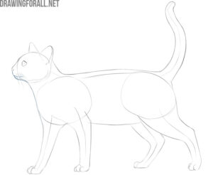 how to draw a cat easy step by step