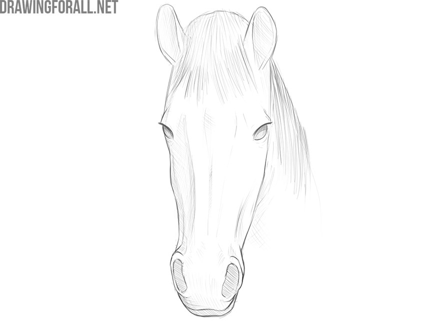 how to draw a horse face