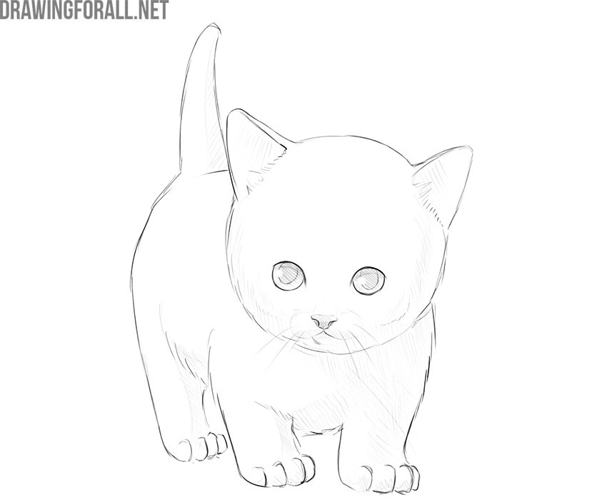 how to draw a kitty cat