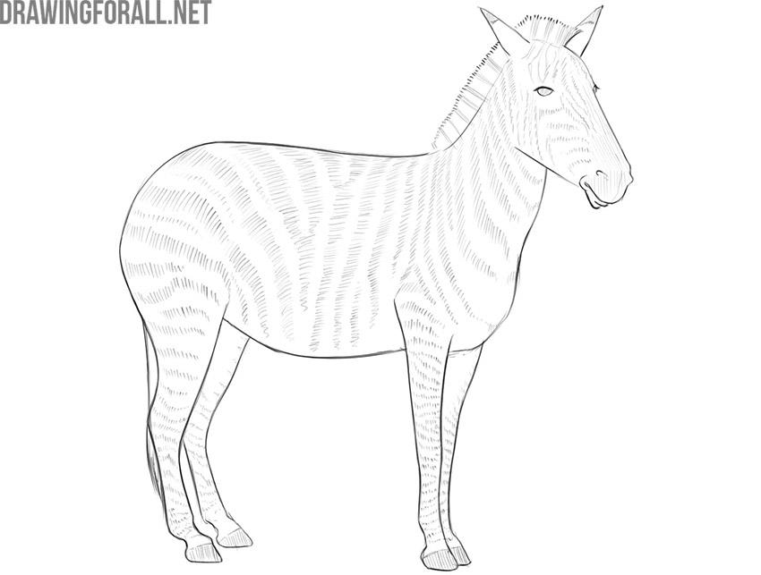 how to draw a zebra easy