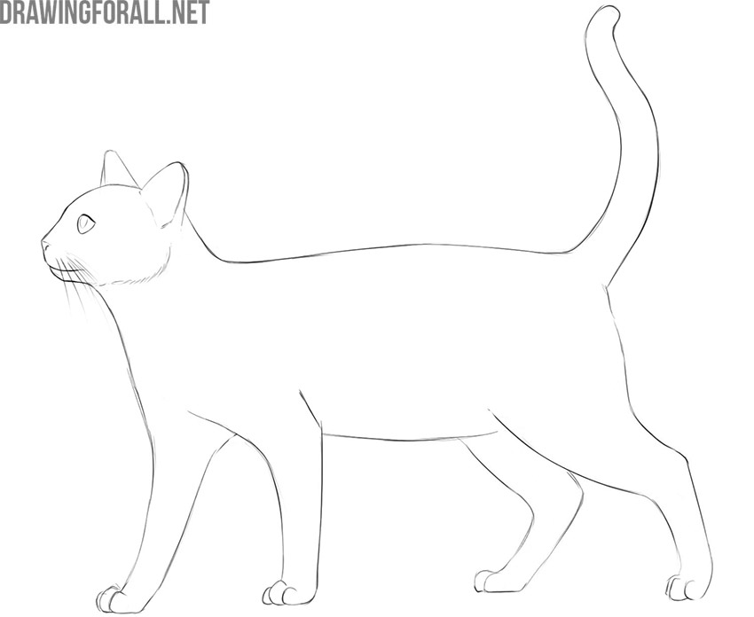 how to draw a cat easyhow to draw a cat easy