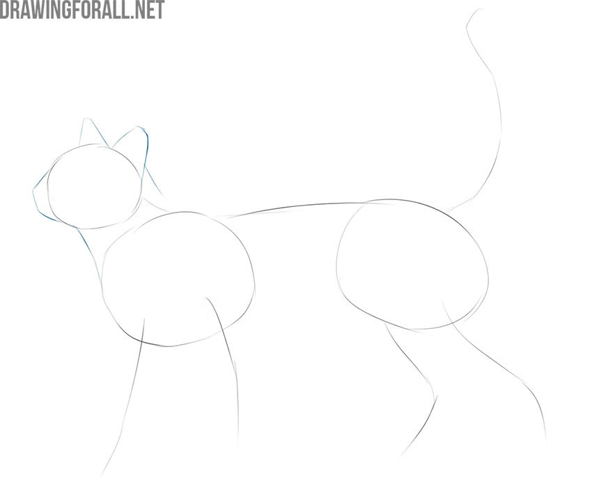 how to draw a detailed cat easy