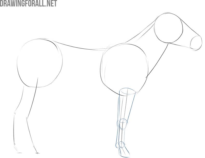 how to draw a zebra easily