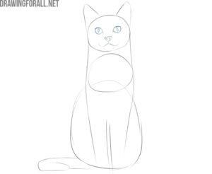 how to draw a cat sitting down step by step