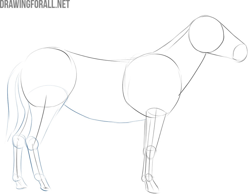 how to draw a zebra easy step by step