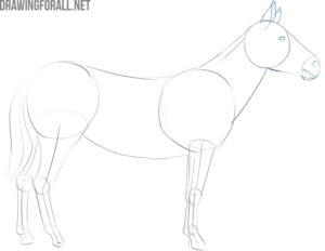 easy steps to draw a zebra