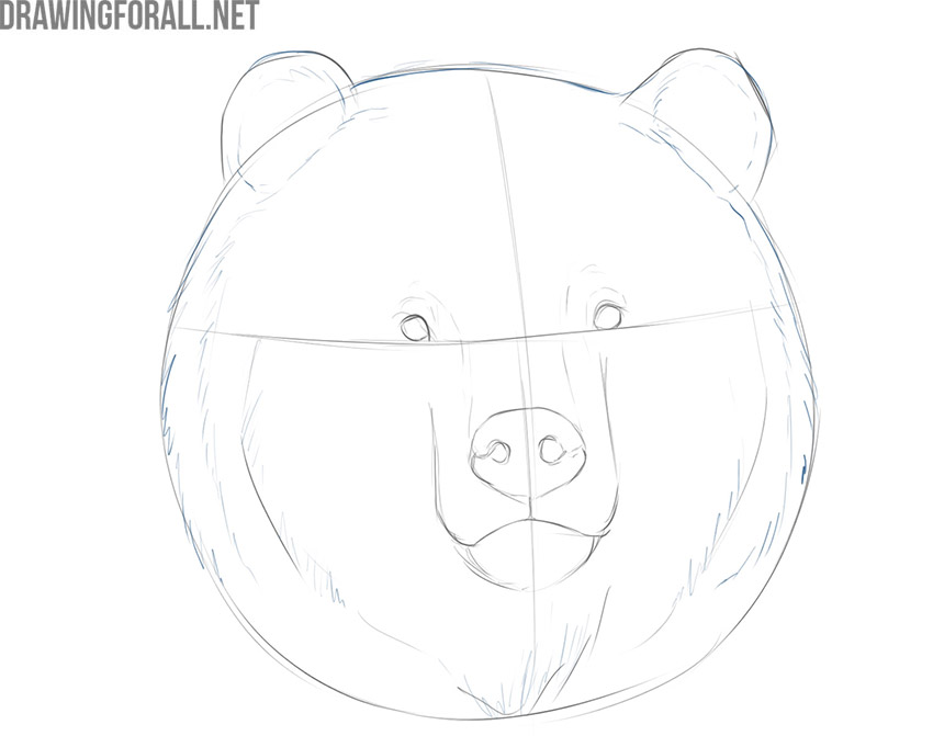 how to draw a bear face step by step easy