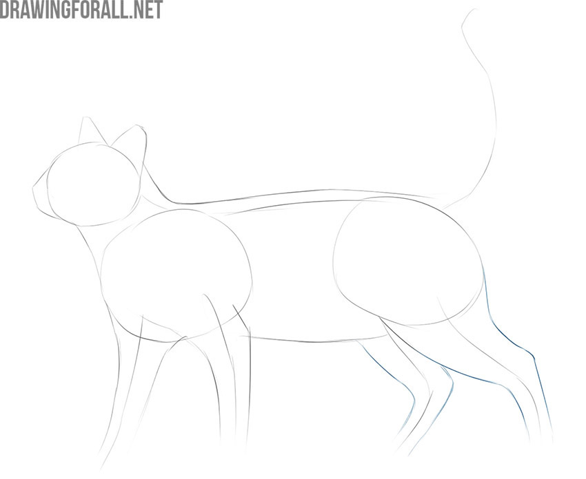 how to draw a cat easy and realistic