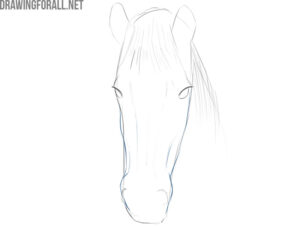 how to draw a horse face step by step for beginners