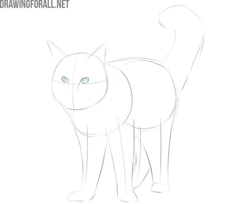 how to draw a maine coon cat easy for beginners