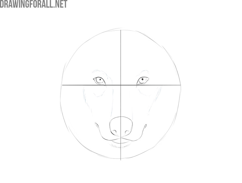 how to draw a wolf face realistic