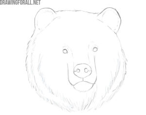 how to draw a bear face realistic