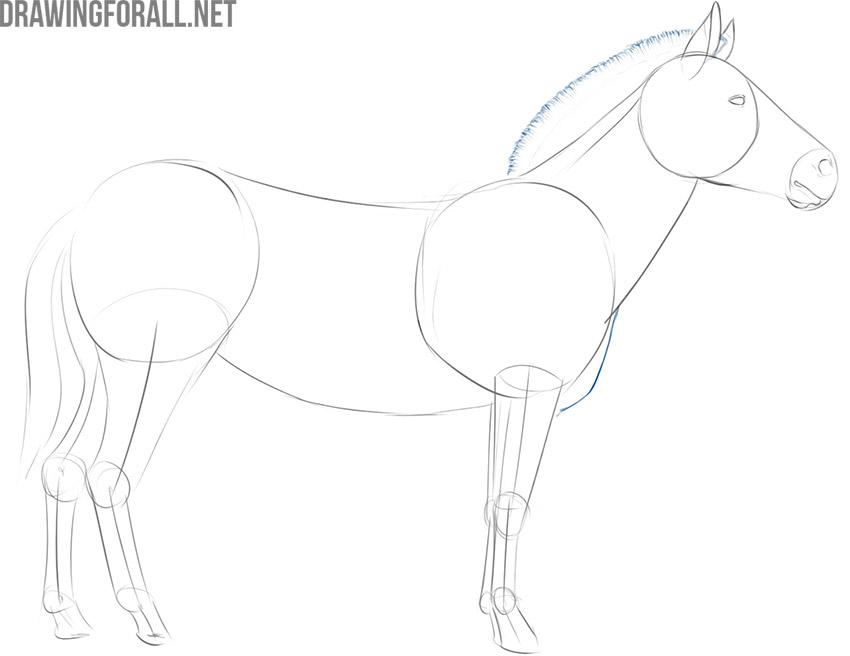 how to draw a big zebra