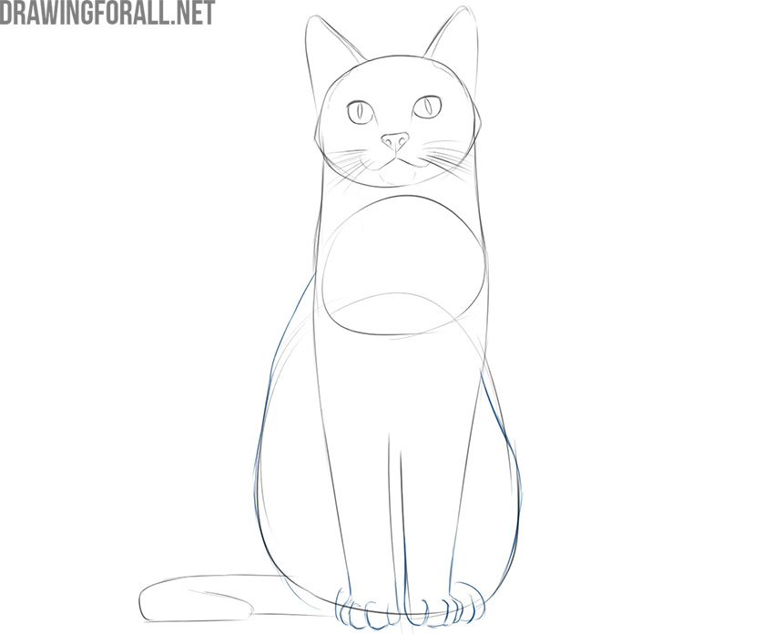 how to draw a cat sitting down easy