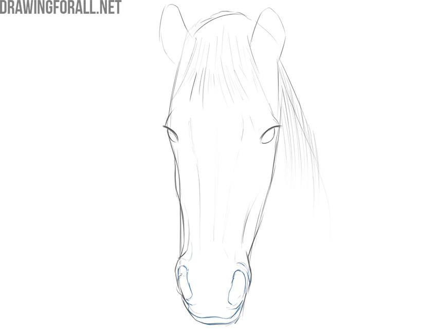 how to draw a horse face realistic
