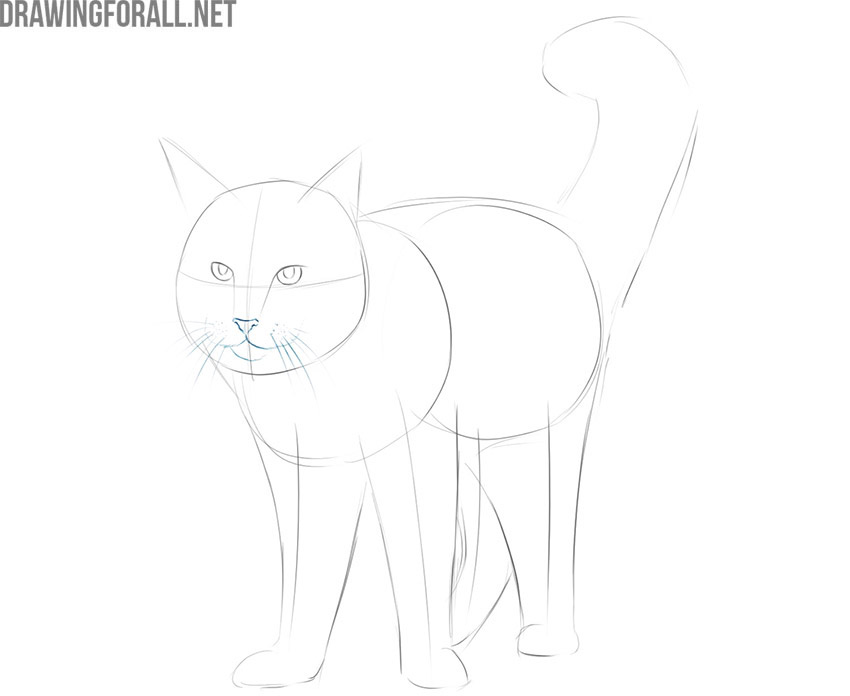 how to draw a maine coon cat for beginners