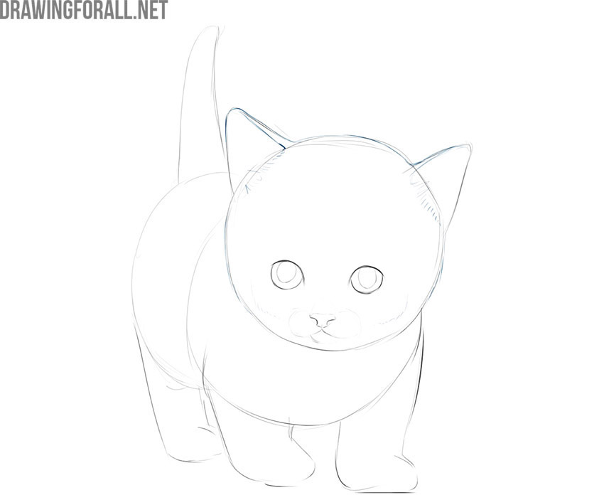 how to draw a simple kitty cat